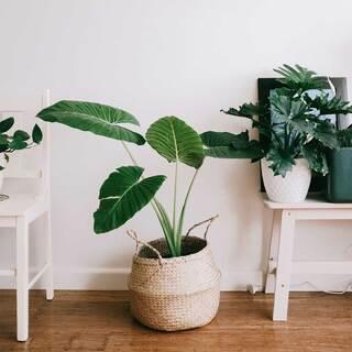 🌿 Plant day 🌿    #andmeunlimited #green #lifestyle #slowlife #slowfashion #houseplants #saturday #decor #nature #anotherwayispossible
